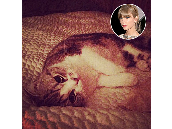 Taylor Swift Shares Her New Kitty Pic On Instagram