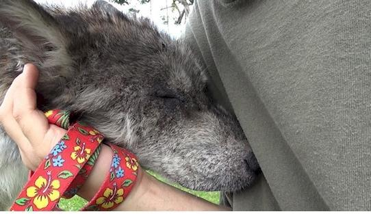 They saved a dying dog, later discovered something shocking4
