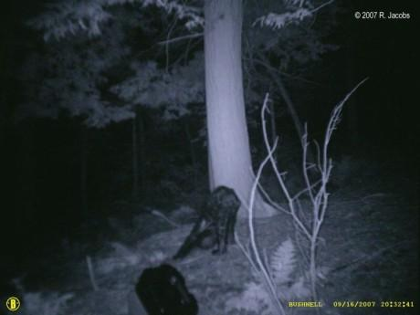 What These Trail Cams Captured, can give you Nightmares