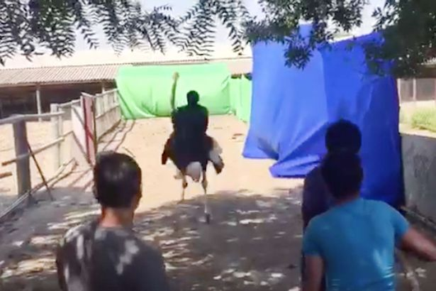 Truth behind footage of man riding ostrich on busy street is something you would like to know2